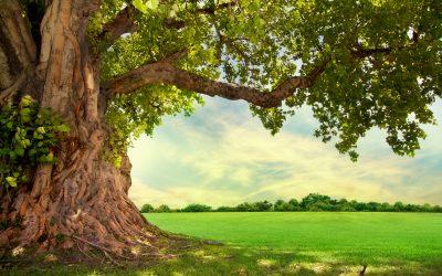 Die Heilkraft der Natur in unseren Räumen